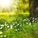 wiosenne kalendarium